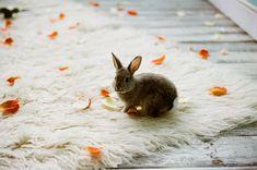 bunny. bunny. bunny.