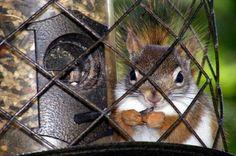 Feeding Birds by Keeping Squirrels Away: Outwit squirrels with these tips for keeping squirrels from eating bird seed. birdsandblooms.com