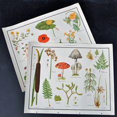 Set of 2 Mushroom / Poppy Teaching Aid Prints