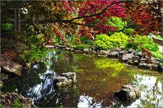 Pond In Zen Garden jardín zen, color, peac place, garden zen, japanesezen garden, zen gardens, gorgeous garden, garden inspir, pond