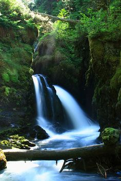 tropic rainforest, secret waterfall, girdwood alaska