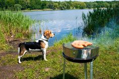 RV Camping with your dog