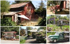 If you are coming out to our area to shop our show Sept. 5th-7th, for the day or the whole weekend and looking for more things to do, make sure to visit Myrtle Creek ... Located just 2 miles from the Vintage Marketplace... check out their FB page here, https://www.facebook.com/MyrtleCreekGardenNursery?fref=ts