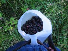 gathering jug