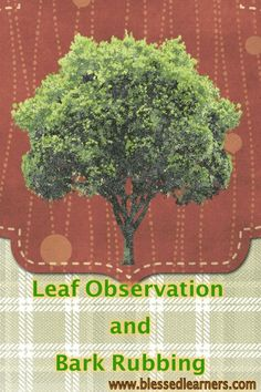 Leaves Observation a