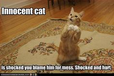 The cats expression ..