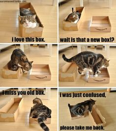 relationship, old boxes, kitten, anim, silly cats, funny cats, funni, hous, kitty