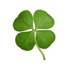 A four-leaf clover~for luck!