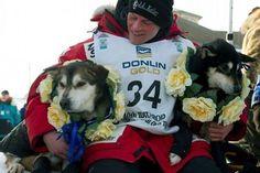 sled dogs, iditarod 2012, news, dog race, dallas, alaska, iditarod winner, dalla seavey, iditarod dog