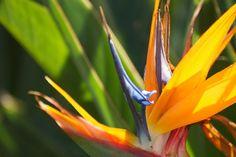 /by CrayolaNation #flickr #hawaii #flowers
