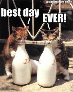 Om! Nom! Nom! cats, anim, drinking, funni, milk bottles, kittens, kitti, drinks, kitty