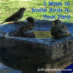 5 ways to invite birds to your yard ~ Go Explore Nature