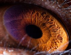 Incredible Close-Up Shots Of Animal Eyes - Gallery