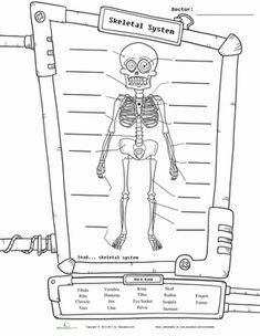 4th Grade Science worksheets skeleton   skeleton-diagram-life-science-fifth.gif