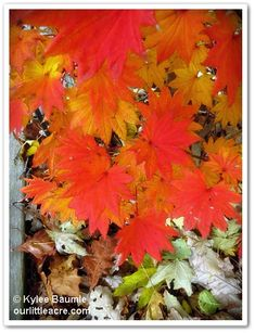 "Our Little Acre: ""Wordless Wednesday: LEAVES"""