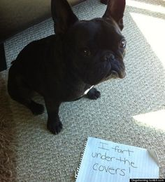 Dogshaming: Owners Publicly Humiliate Naughty Pets Online (PICTURES)