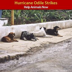 Animals Stranded from Hurricane Odile - Help Now at The Animal Rescue Site