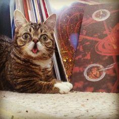 Lil Bub the cat.
