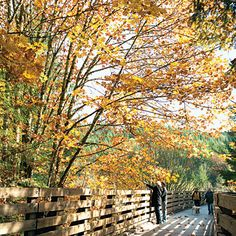 Fall color along Oregon's Banks-Vernonia State Trail