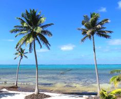 #QuintanaRoo, #Mexico: #Housesitter / #Dogsitter needed for private home and property. www,caretaker.org
