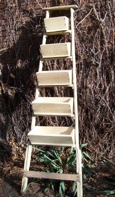 Ladder with planter boxes for a vertical garden. I can think of several places where this would be really cute!
