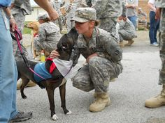 Love on a Leash - The Foundation for Pet Provided Therapy - North Central Indiana Chapter soldier, pet