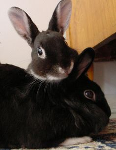 RT @Bunny Buddhism: A bunny who cannot accept others has not yet accepted herself.