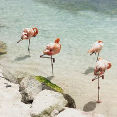 Flamingo Beach acces