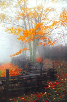beautiful autumn leaves, rustic wooden fence