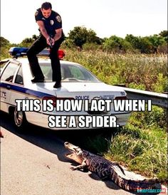 Spiders I can handle, but Frogs make me act like this... crazy!