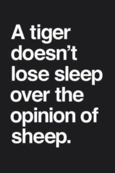 Tiger's don't lose sleep over the opinion of sheep tiger