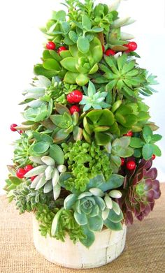Succulent Christmas Topiary Centerpiece <3 #Christmas #Holidays