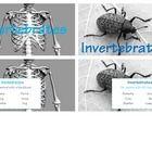 Sciencebiology on Vertebrates Vs Invertebrates Picture Sorting Cards Montessori Printables