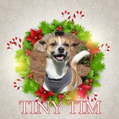 Tiny Tim is today's