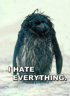 (via Funny Hate Everything Miserable Penguin | Funny Joke Pictures)