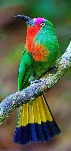 RAINBOW BIRD!!!!!!!
