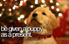 bucket list. be given a puppy as a present