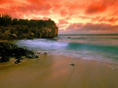 'Hawaii Hawaii Hawaii Hawaii.' (Amie Cherry)