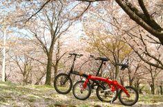 ©イチローさま / Mu C9 2006年、Curv D3 2006年 / 大阪の桜の名所「毛馬桜之宮公園」に夫婦で出かけた時のものです。ちょうど散り際で芝生の上が一面桜色で幻想的でした。