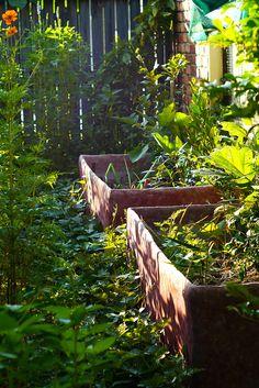 Ferrocement raised garden beds
