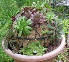 Tutorial to make a succulent globe.