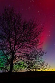 lone tree against #aurora beautiful night