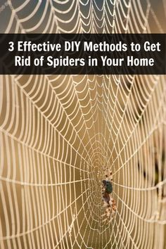 3 Effective DIY Methods to Get Rid of Spiders in Your Home @Sue Bar @Crystal Towler Diaz