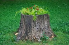 flowers in an old tree stump