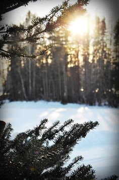 #shine #trees #snow