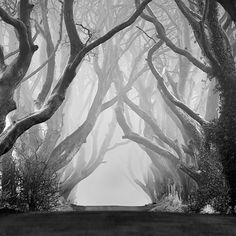 hedg, art, trees, natur, place