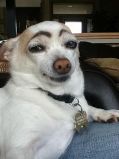 Bored? Draw eyebrows on your dog and laugh until his next bath. I just died