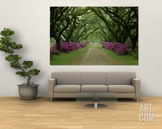 A Beautiful Pathway Lined with Trees and Purple Azaleas Wall Mural by Sam Abell at Art.com