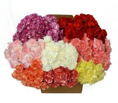 These assorted carnations (300-count) are perfect for school fundraisers