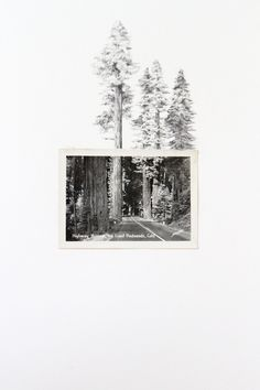 Highway Through the Giant Redwoods by spencer studio
